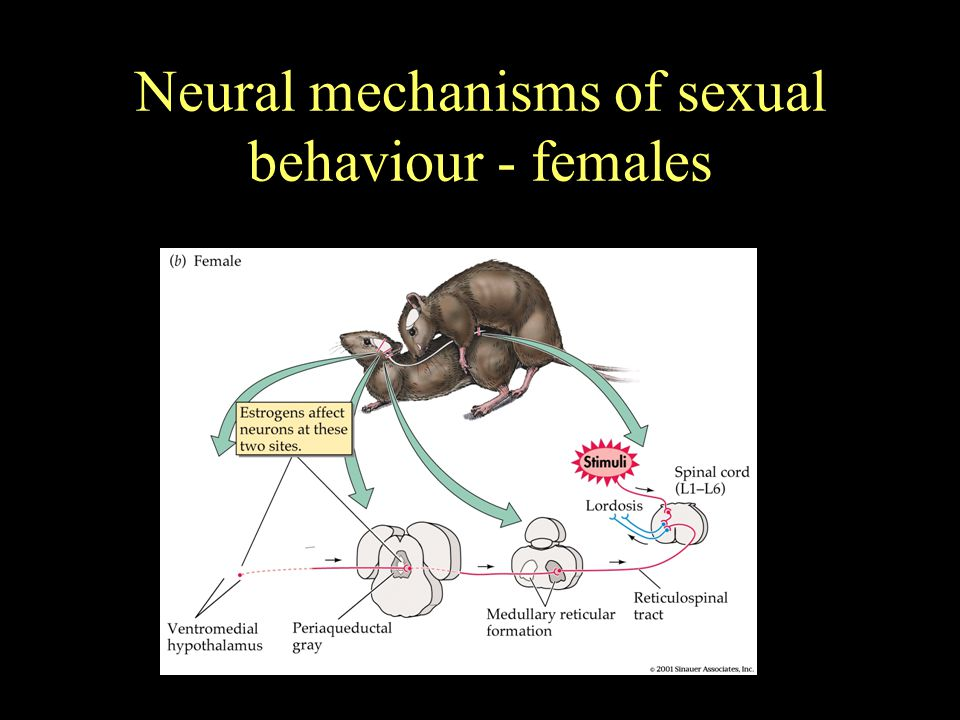 Neural mechanisms of sexual behaviour - females