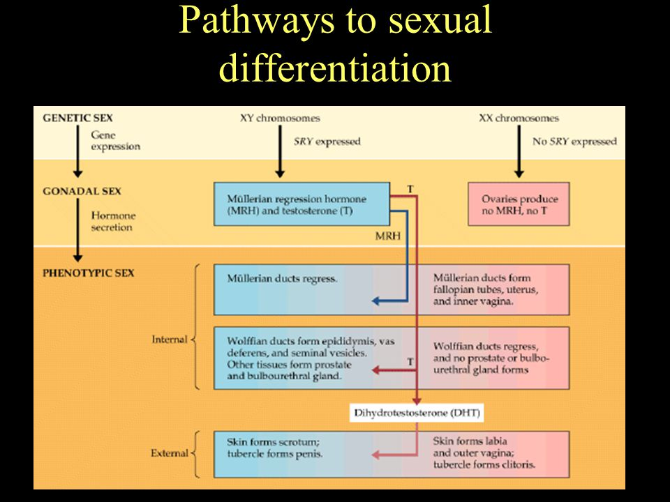 Pathways to sexual differentiation