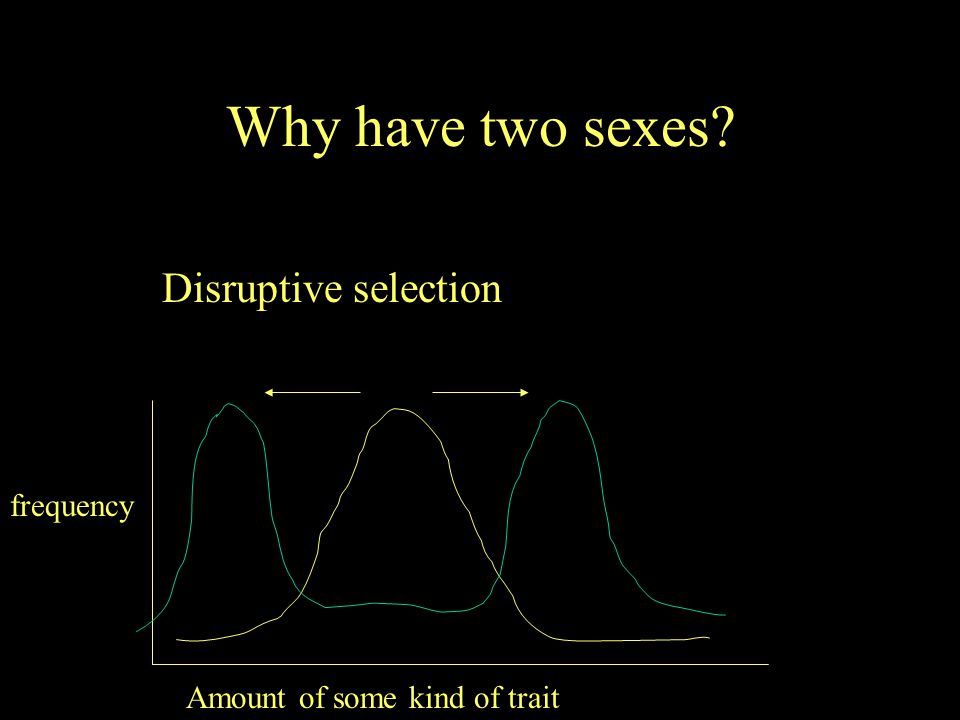 Why have two sexes Disruptive selection frequency