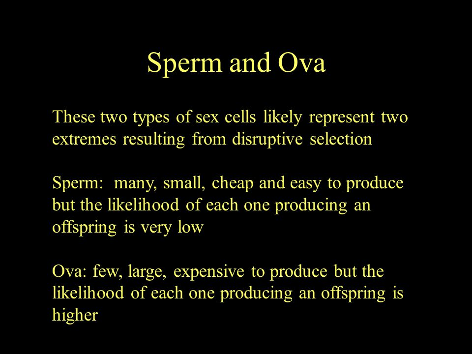 Sperm and Ova These two types of sex cells likely represent two extremes resulting from disruptive selection.