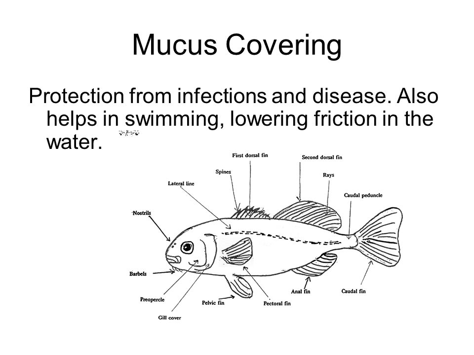 Mucus Covering Protection from infections and disease.