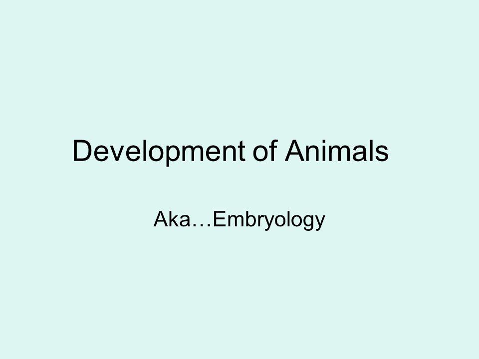 Development of Animals