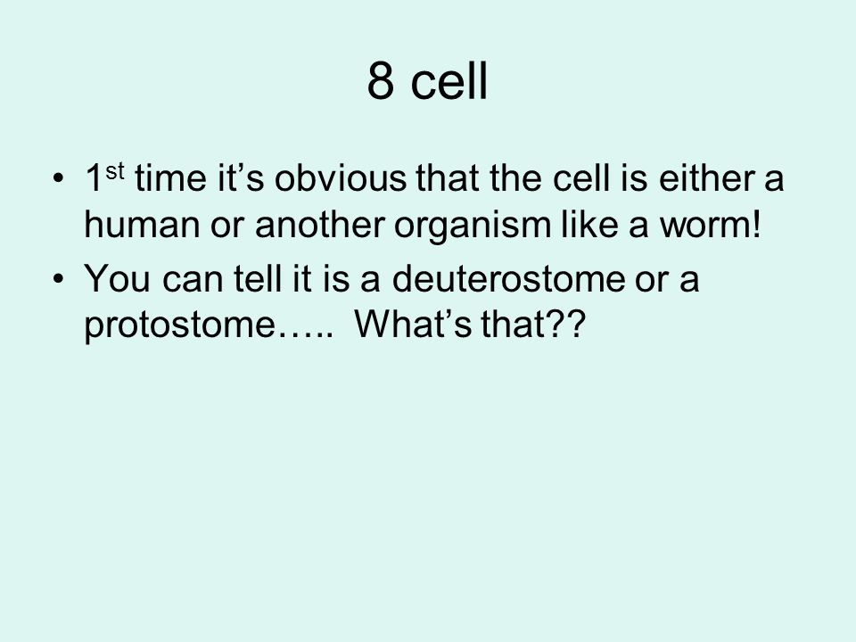 8 cell 1st time it's obvious that the cell is either a human or another organism like a worm!