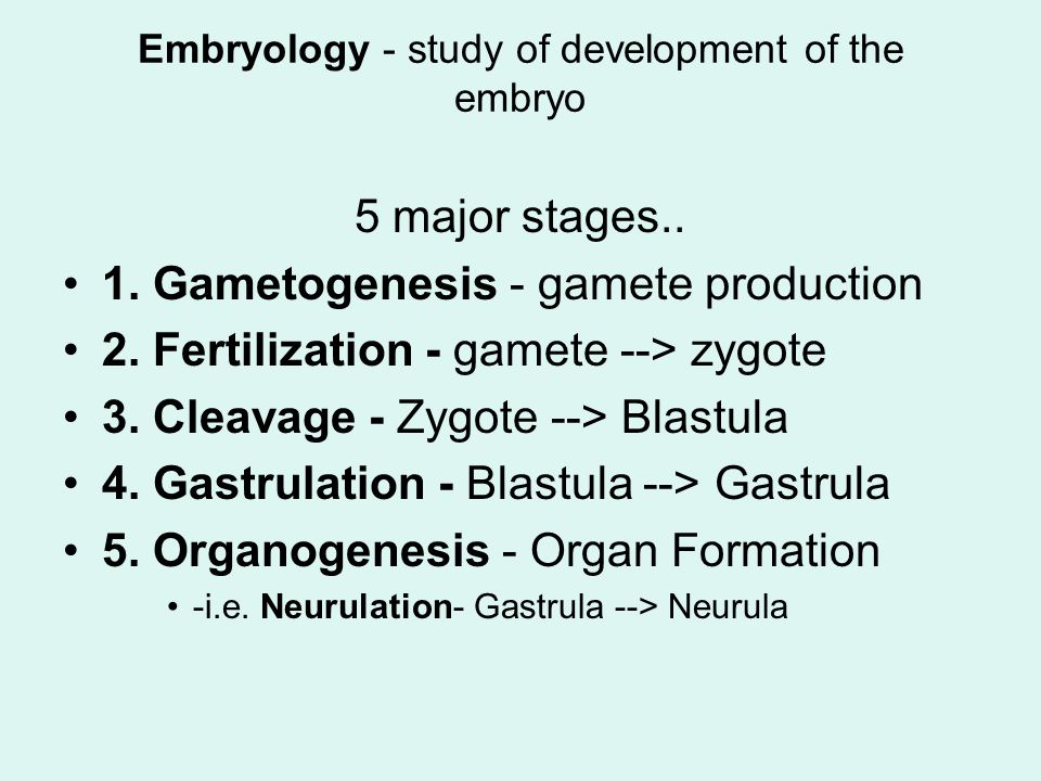 Embryology - study of development of the embryo