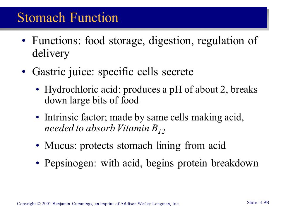 Stomach Function Functions: food storage, digestion, regulation of delivery. Gastric juice: specific cells secrete.