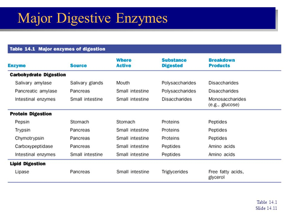 Major Digestive Enzymes