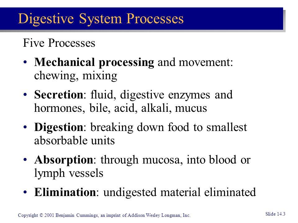 Digestive System Processes