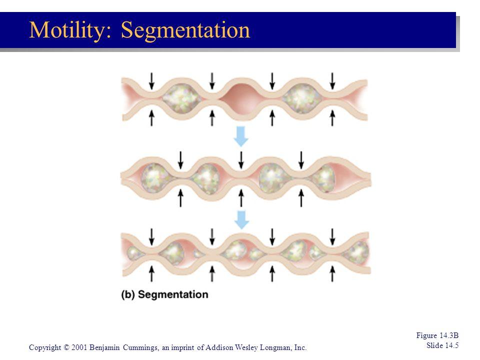 Motility: Segmentation
