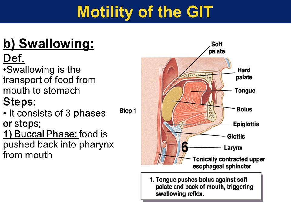 Motility of the GIT b) Swallowing: Def. Steps: