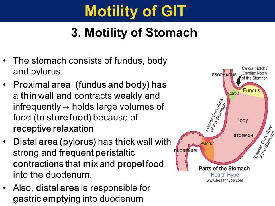 Motility of GIT 3. Motility of Stomach