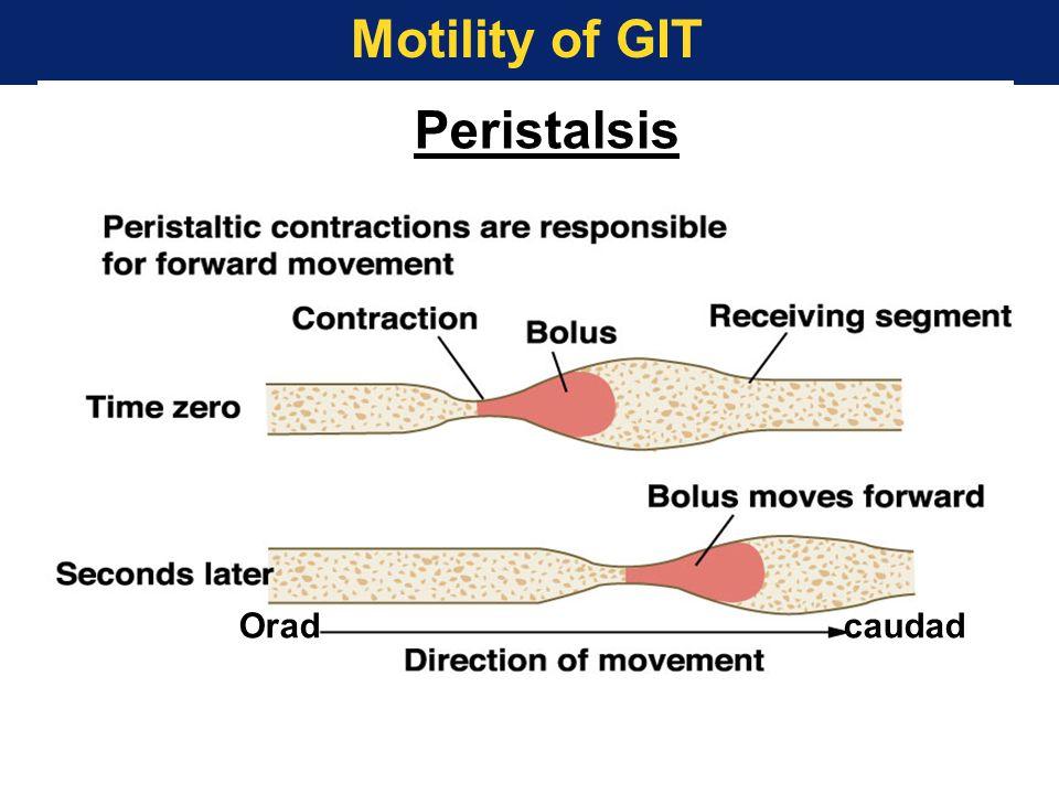 Motility of GIT Peristalsis