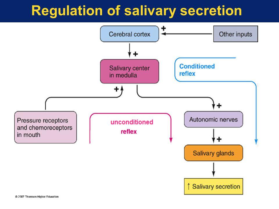 Regulation of salivary secretion