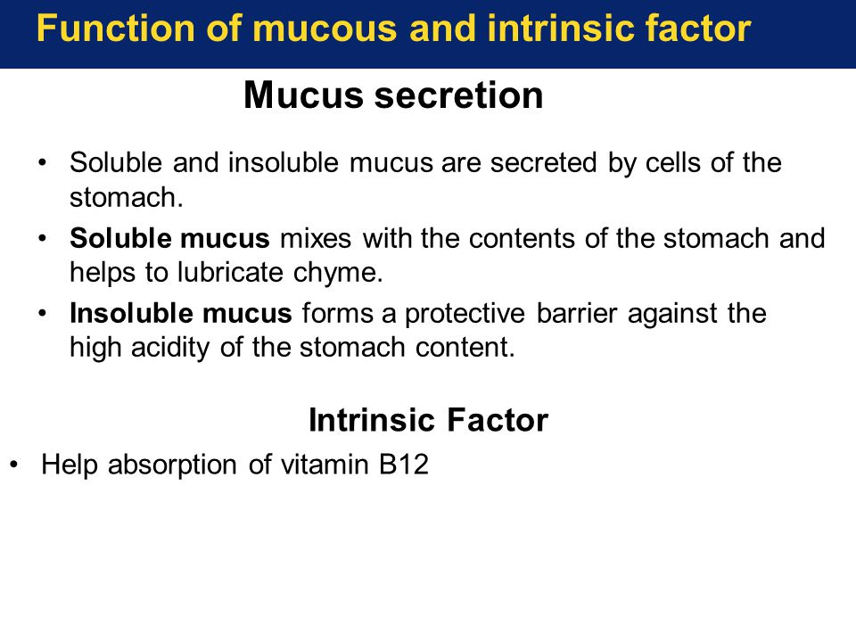 Function of mucous and intrinsic factor