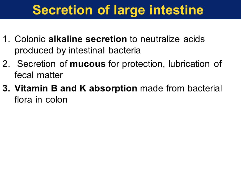 Secretion of large intestine