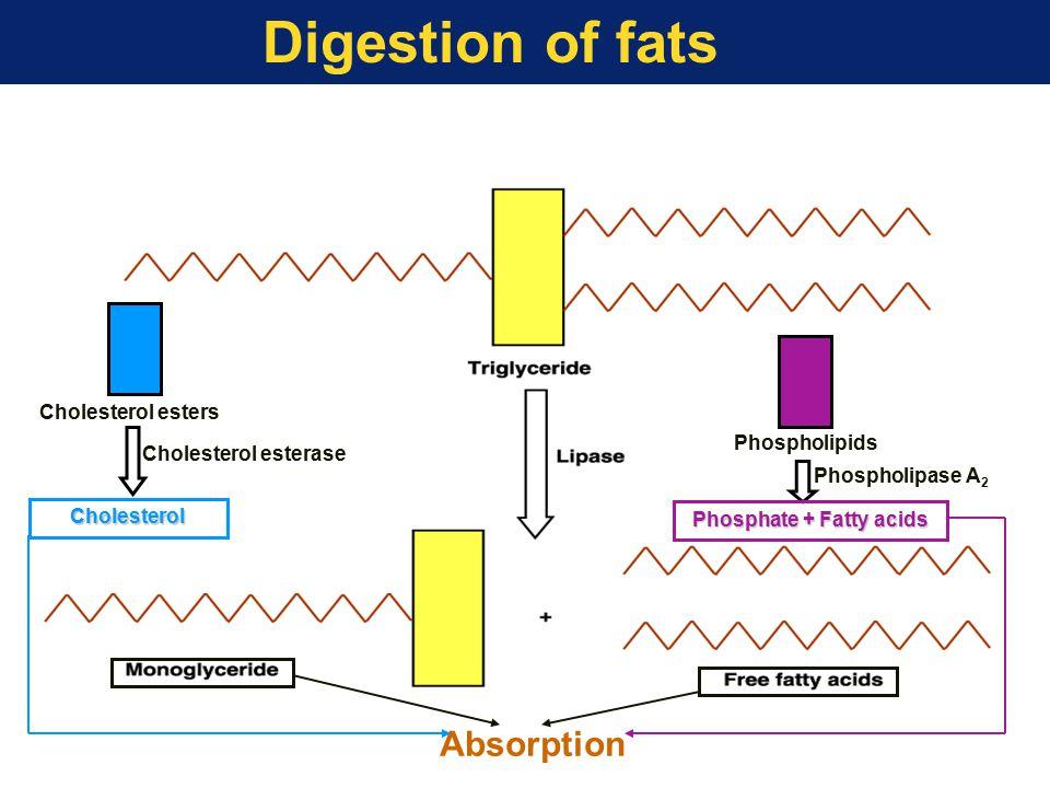 Phosphate + Fatty acids
