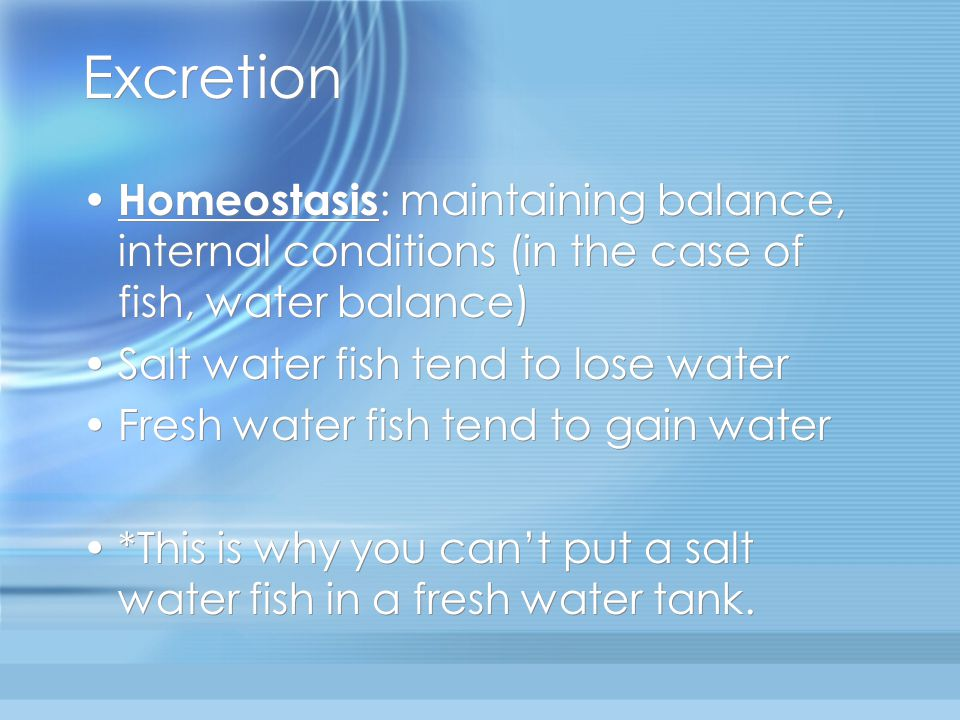 Excretion Homeostasis: maintaining balance, internal conditions (in the case of fish, water balance)
