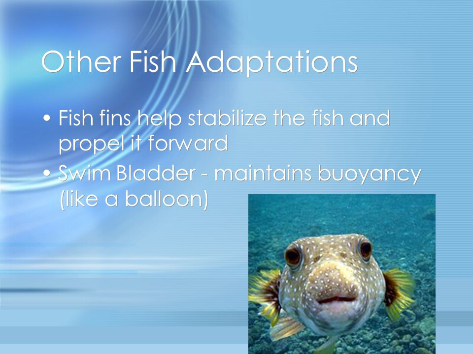 Other Fish Adaptations