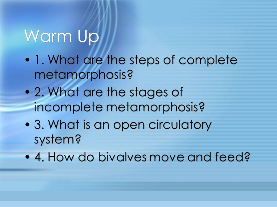 Warm Up 1. What are the steps of complete metamorphosis