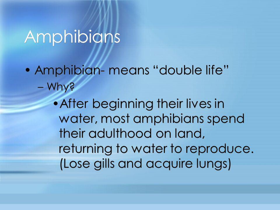 Amphibians Amphibian- means double life