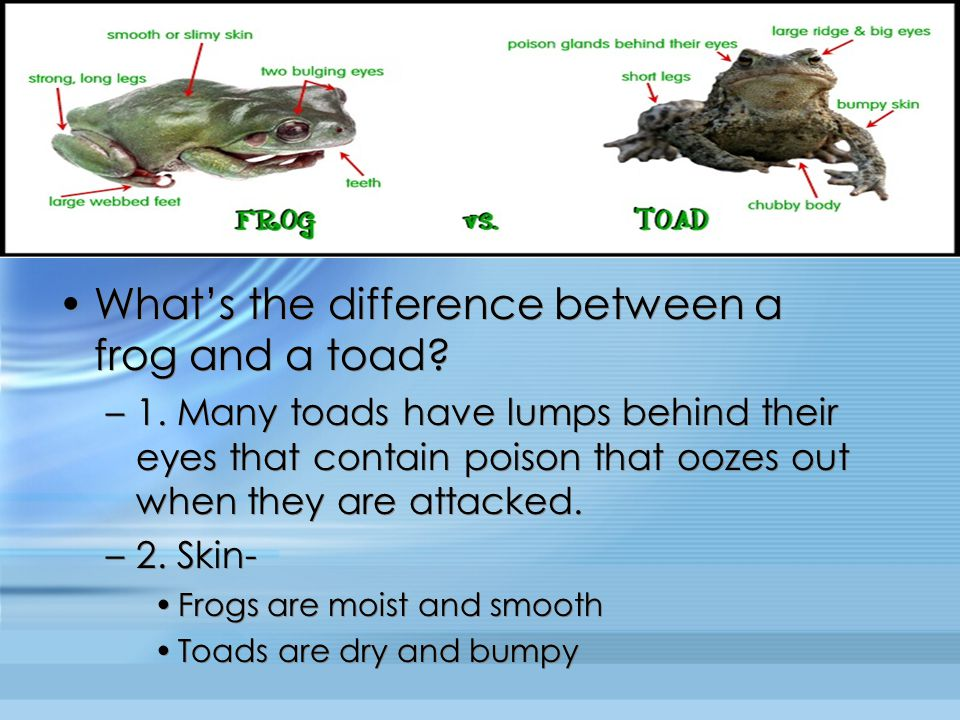What's the difference between a frog and a toad
