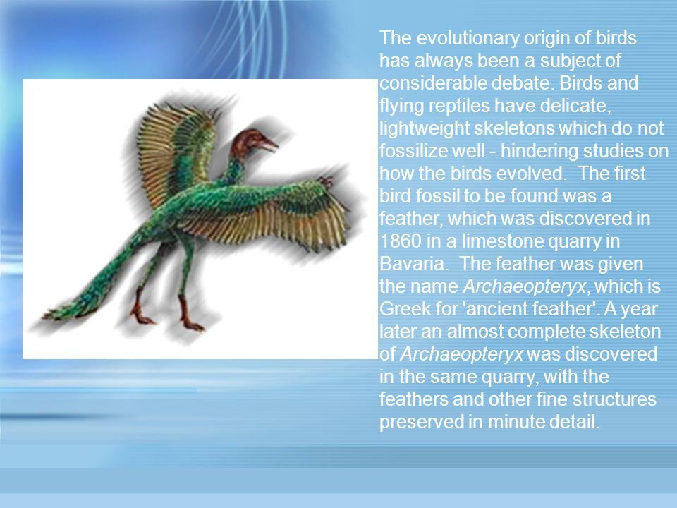 The evolutionary origin of birds has always been a subject of considerable debate.