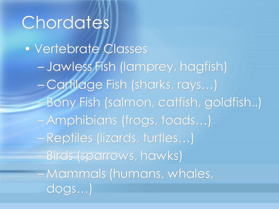 Chordates Vertebrate Classes Jawless Fish (lamprey, hagfish)