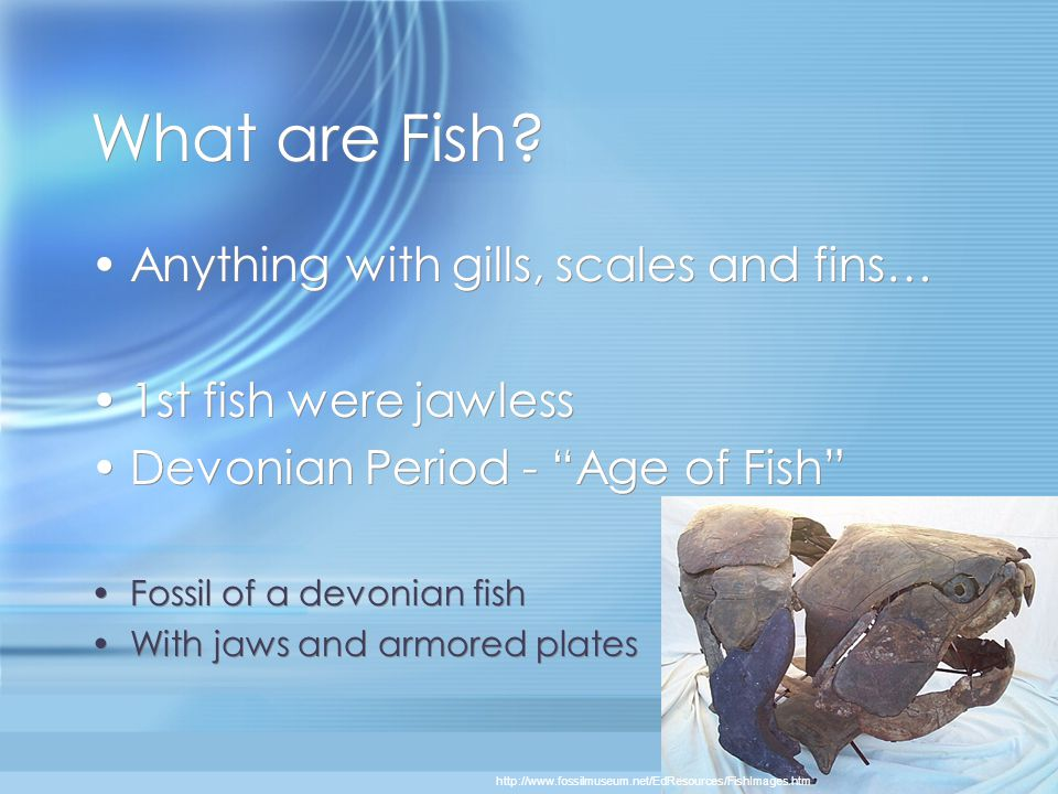What are Fish Anything with gills, scales and fins…
