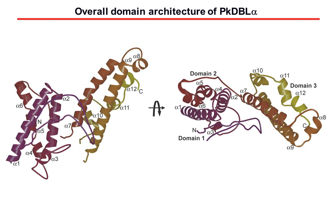 Overall domain architecture of PkDBLa