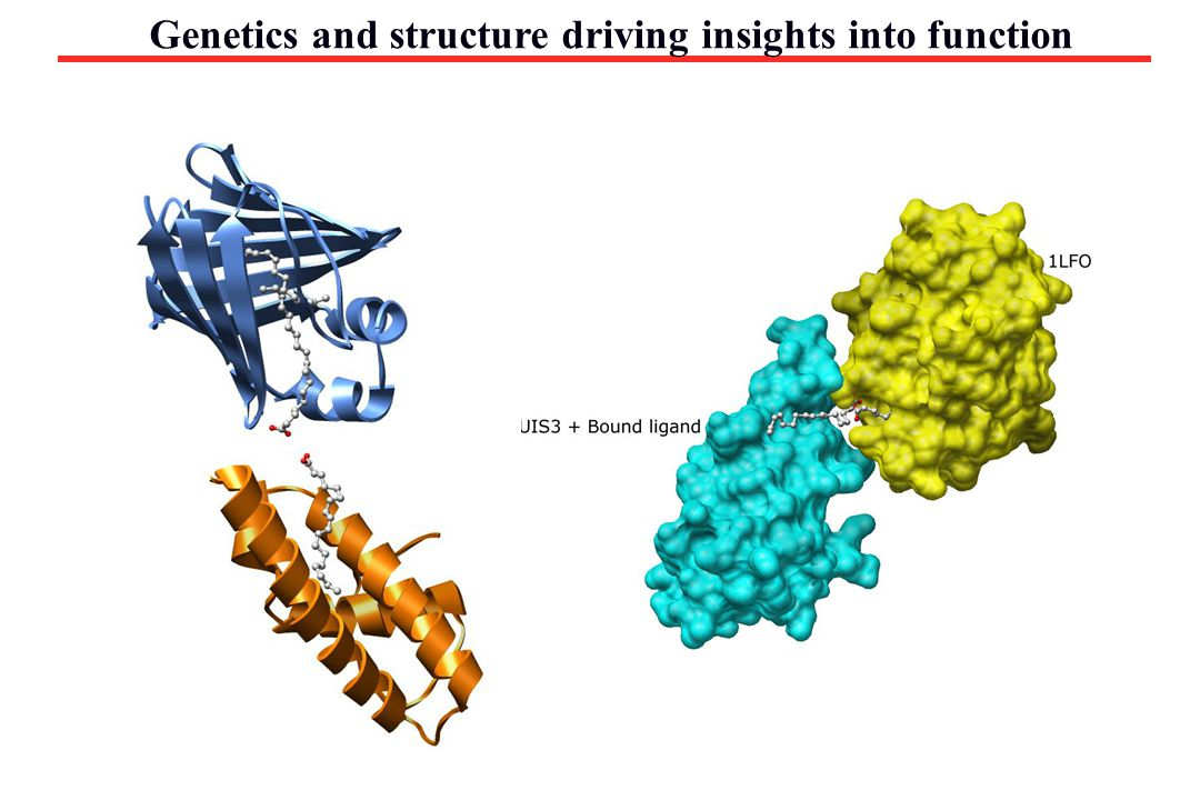 Genetics and structure driving insights into function