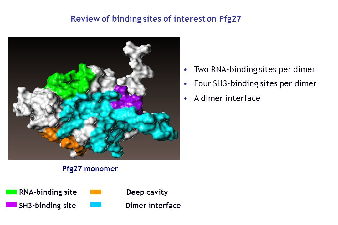 Review of binding sites of interest on Pfg27