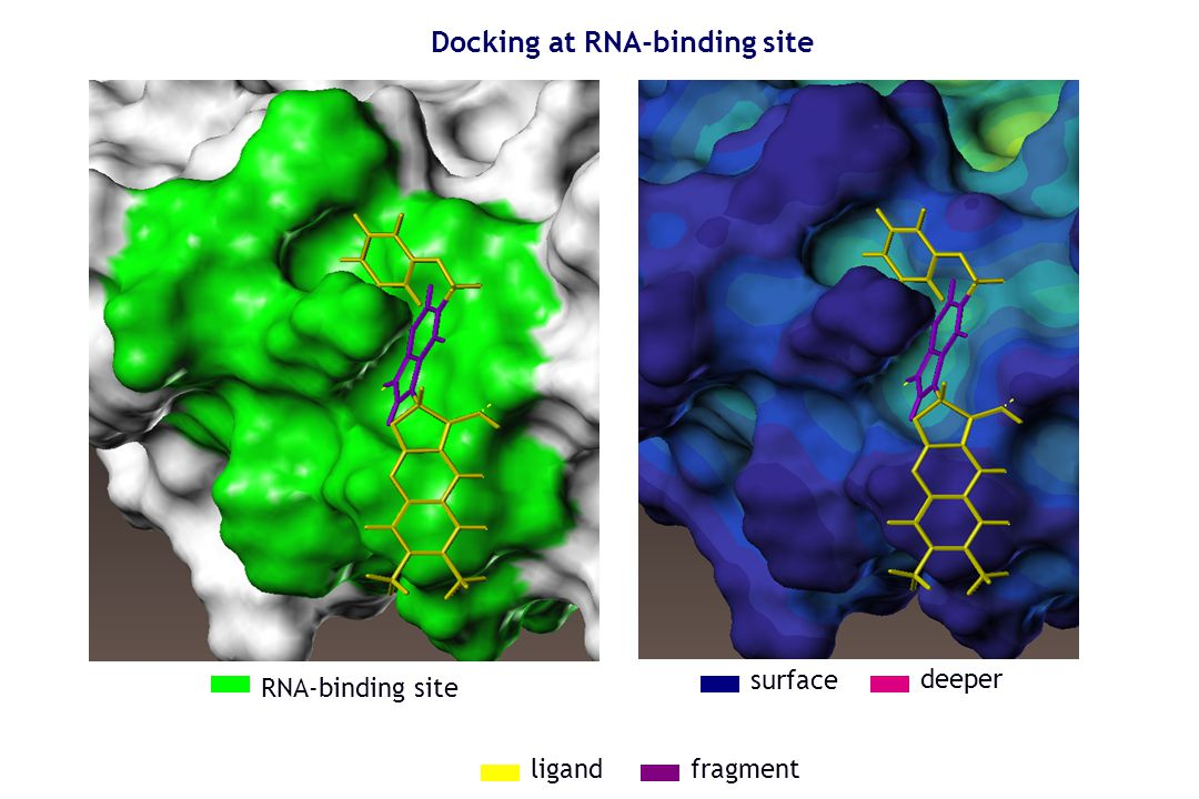 Docking at RNA-binding site