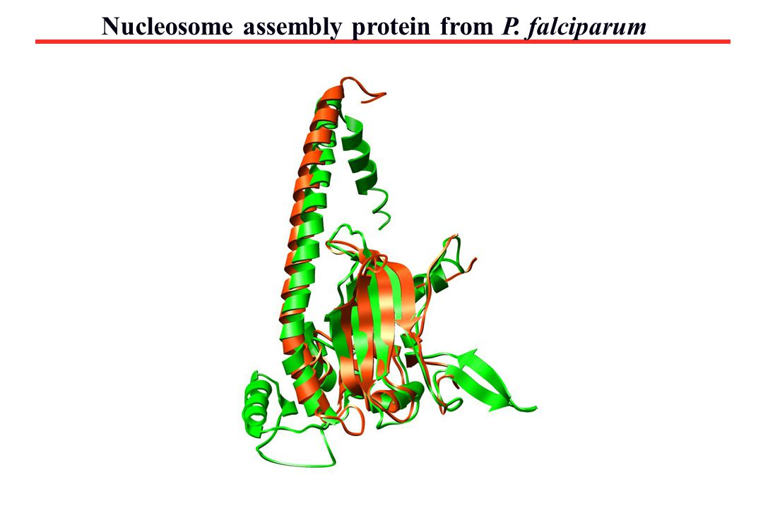 Nucleosome assembly protein from P. falciparum