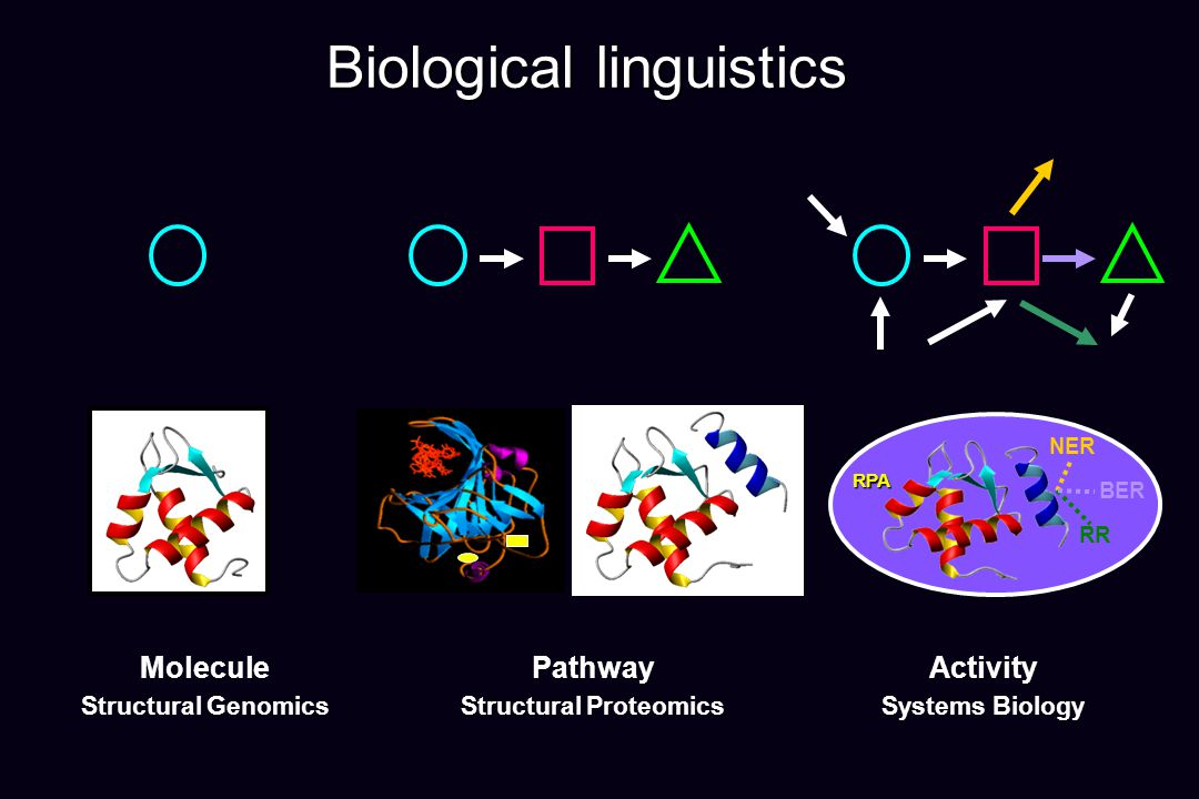 Biological linguistics