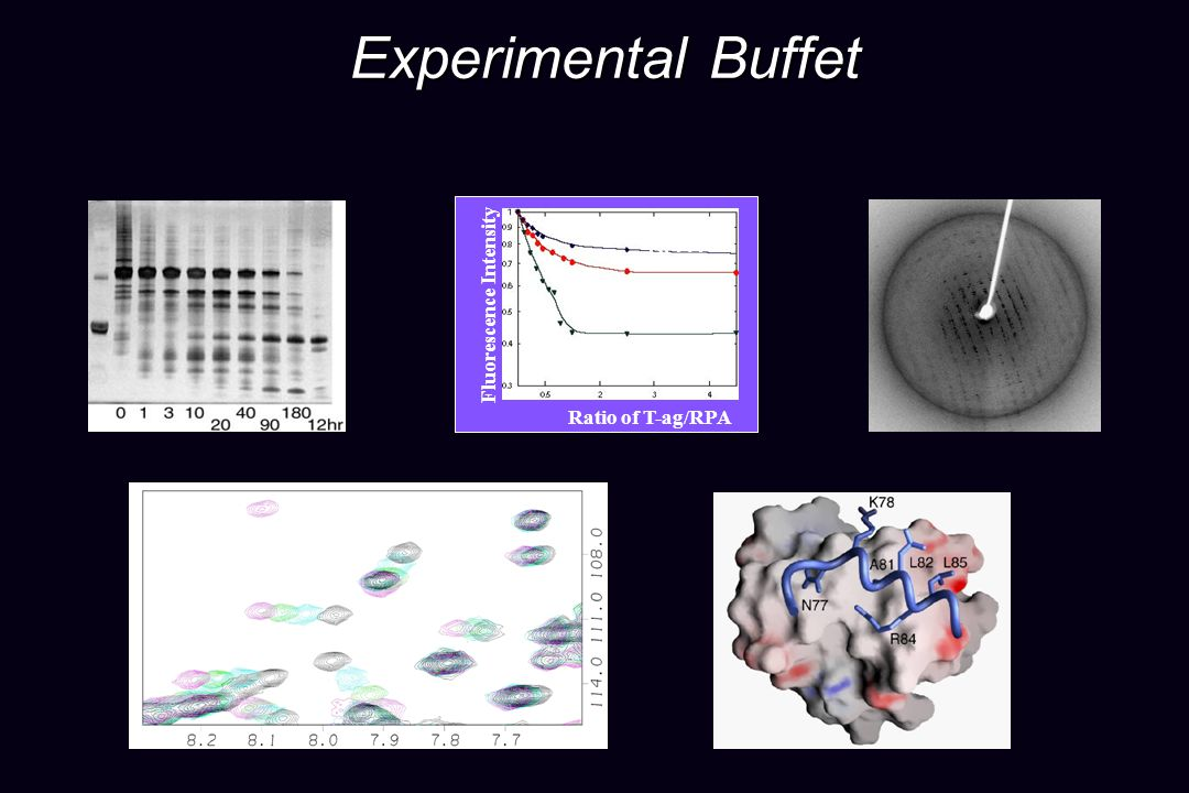 Experimental Buffet RPA-A Fluorescence Intensity RPA-B RPA-AB