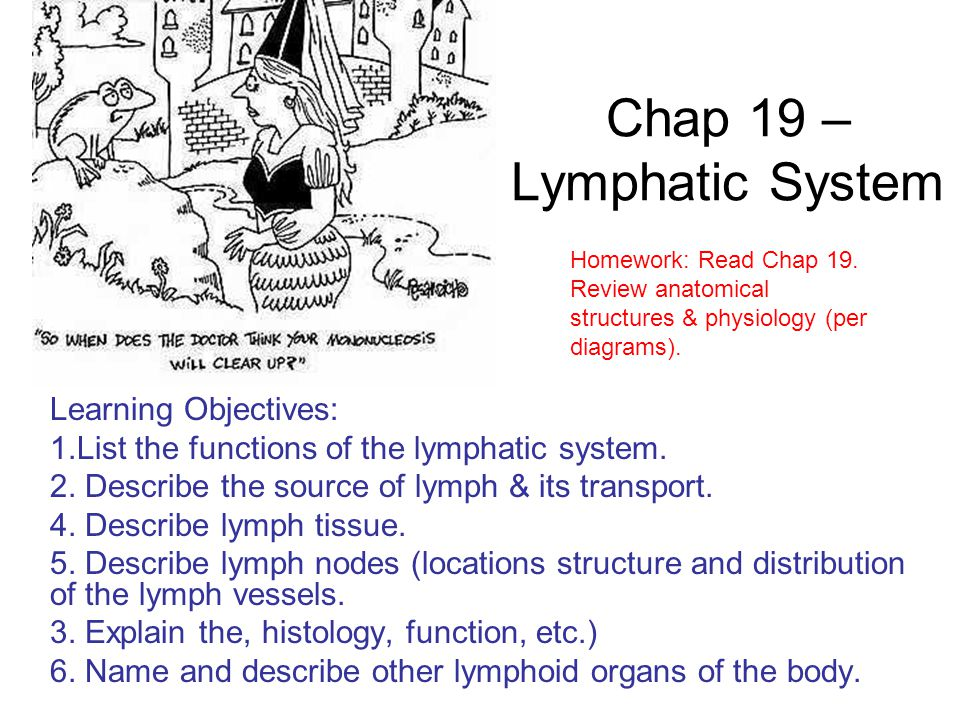 Chap 19 – Lymphatic System
