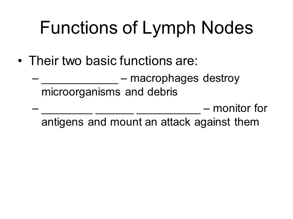 Functions of Lymph Nodes