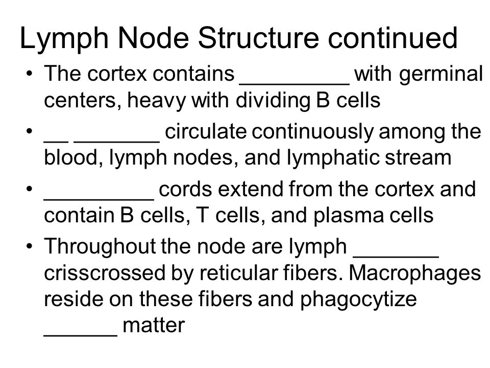 Lymph Node Structure continued