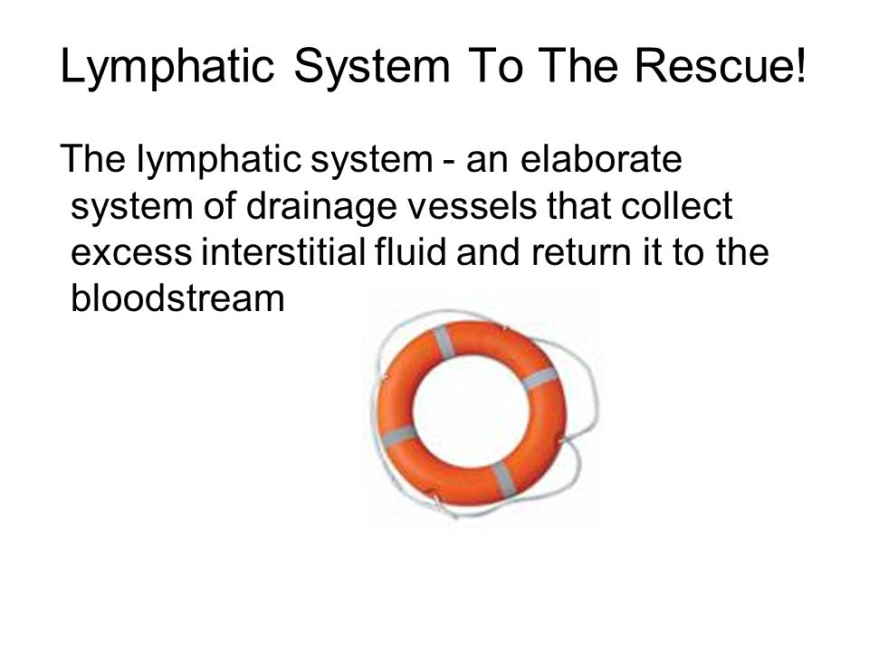 Lymphatic System To The Rescue!