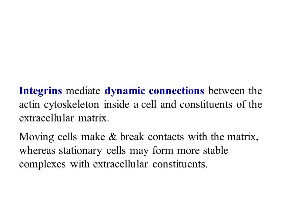 Integrins mediate dynamic connections between the actin cytoskeleton inside a cell and constituents of the extracellular matrix.