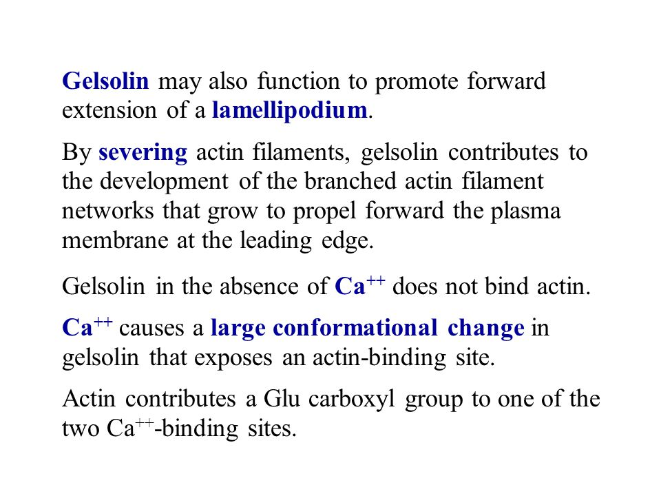 Gelsolin may also function to promote forward extension of a lamellipodium.