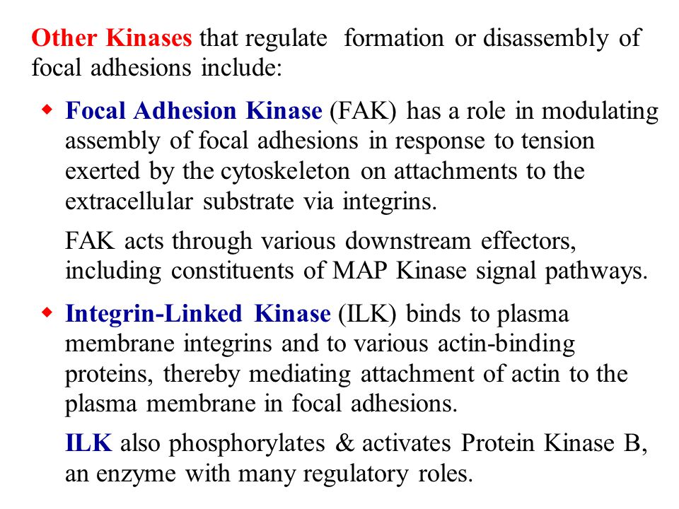 Other Kinases that regulate formation or disassembly of focal adhesions include: