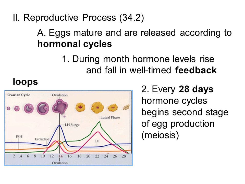 II. Reproductive Process (34.2)