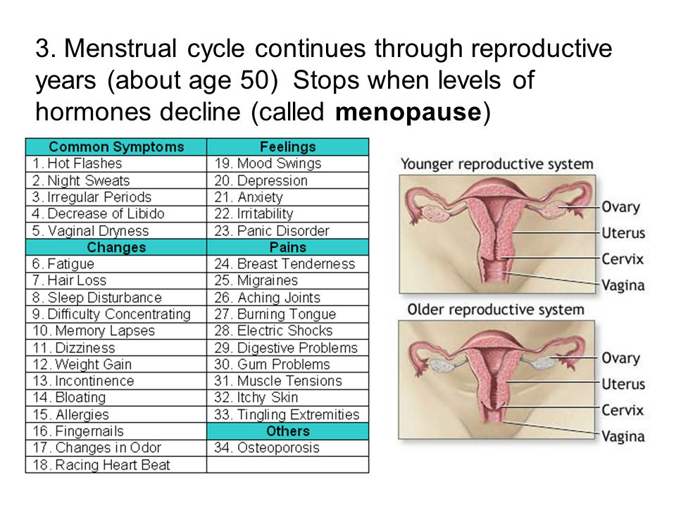 3. Menstrual cycle continues through reproductive years (about age 50) Stops when levels of hormones decline (called menopause)
