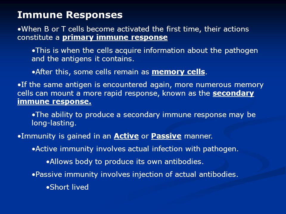 Immune Responses When B or T cells become activated the first time, their actions constitute a primary immune response.