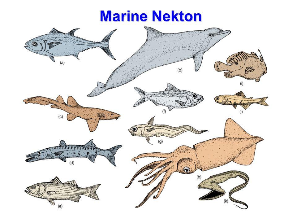Marine Nekton Marine Nekton