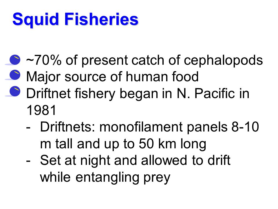 Squid Fisheries ~70% of present catch of cephalopods