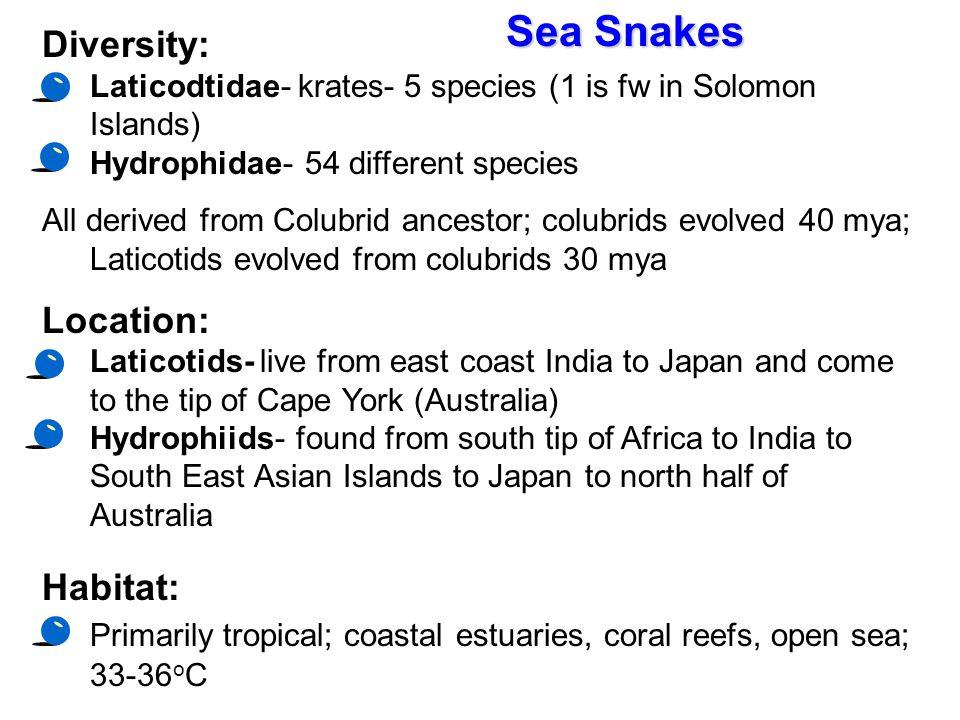 Sea Snakes Diversity: Location: Habitat: