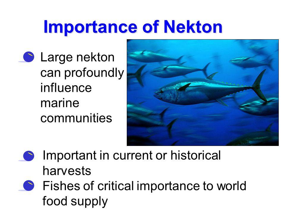 Importance of Nekton Large nekton can profoundly influence marine communities. Importance of Nekton.