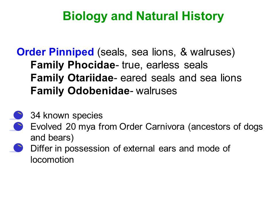 Biology and Natural History