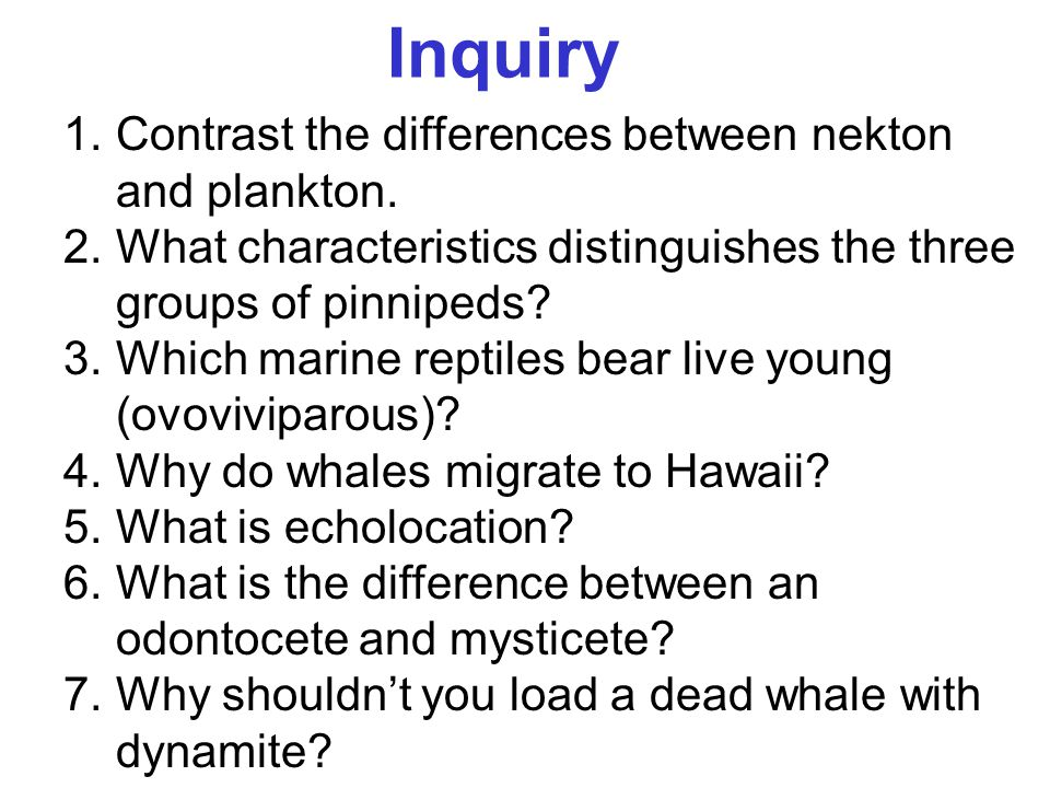 Inquiry Contrast the differences between nekton and plankton.